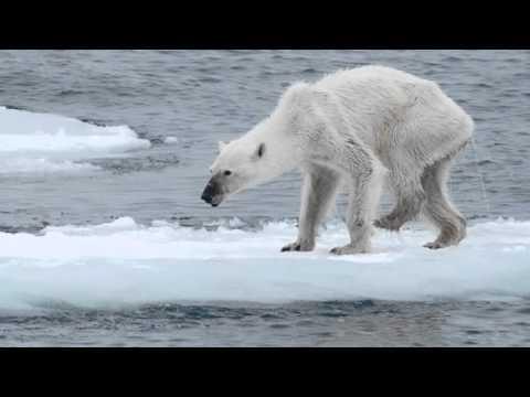 Shaler Area Middle School Climate Change Video