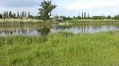 Река Кочеты.wmv - YouTube