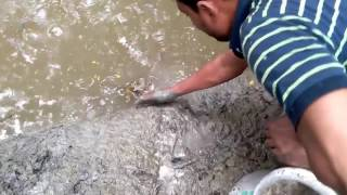 Small Fish Catching New Technic-Small Fish jump in Clay land-Village fishing part 1
