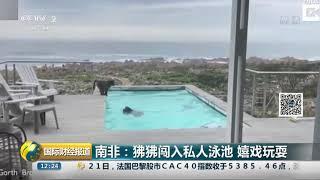 [国际财经报道]南非:狒狒闯入私人泳池 嬉戏玩耍  CCTV财经