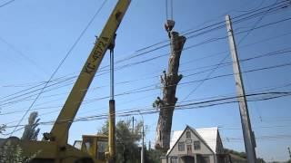MVI 3811(арбористика арборист спил удаление обрезка вырубка пилить спилить удалить рубить обрезать деревьев веток..., 2012-07-24T10:34:49.000Z)