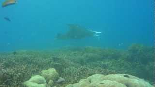 20121019ミクロネシア連邦ヤップ ヤップ島 検索動画 46