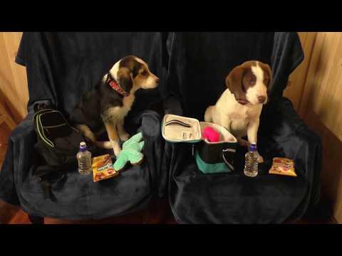 Ainmhithe Animal Rescue - Go Fund Me