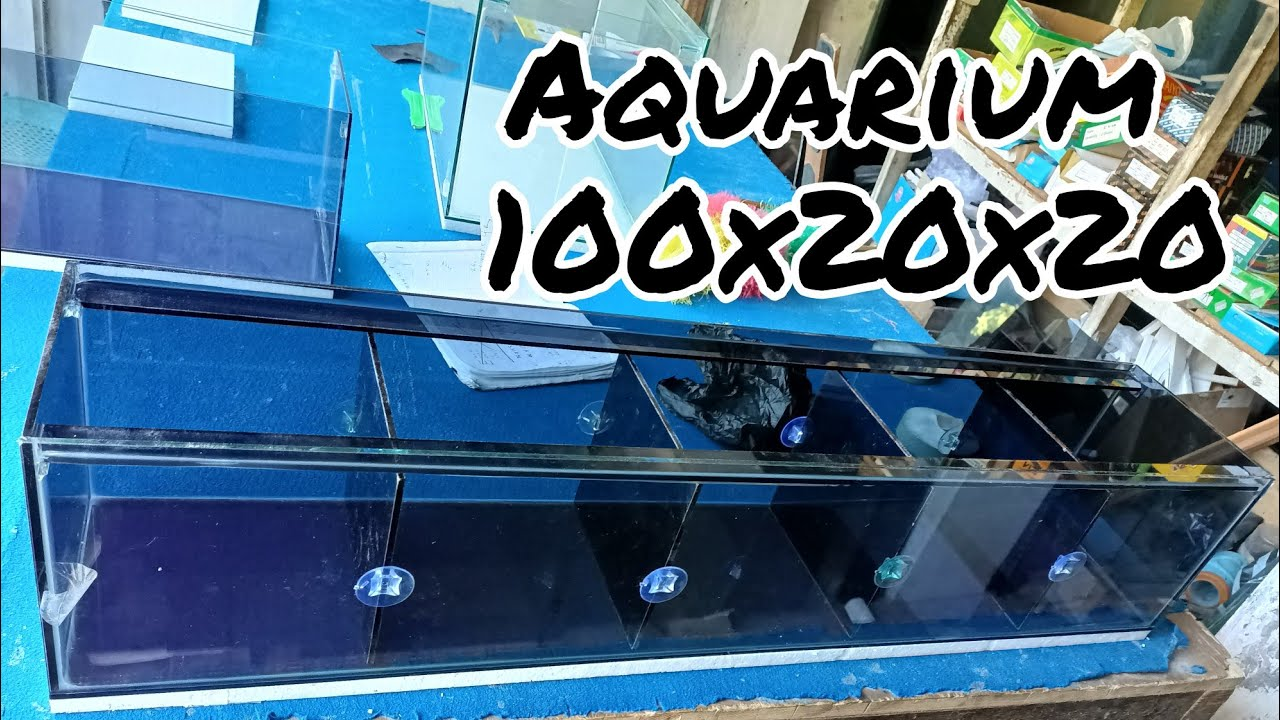 Aquarium 100x20x20 Dikasih Sekat Sekat Youtube Cara membuat sekat aquarium