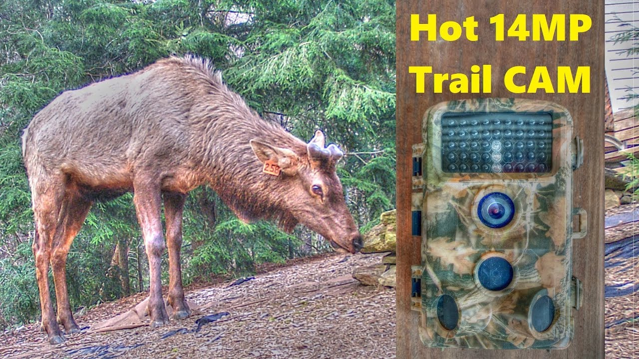 CamPark 14MP Trail Camera Test - High Quality Low Price ...