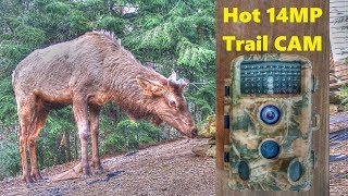 CamPark 14MP Trail Camera Test - High Quality Low Price Wildlife and Security CAM