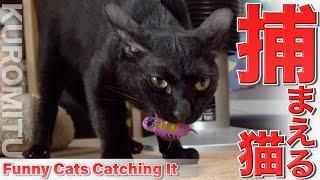 上手に捕まえる黒猫