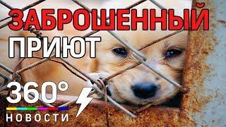 Заброшенный приют для собак нашли в Калужской области