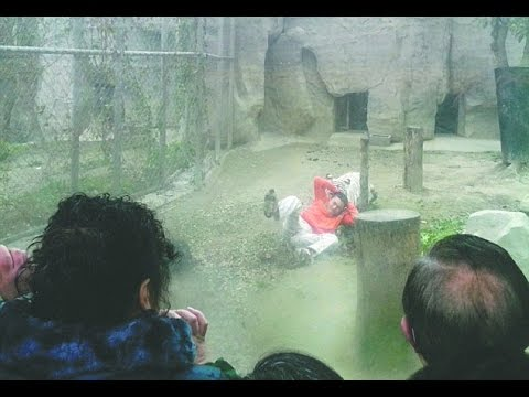 Indian Zoo Tiger Kills Man Who Climbed Into Moat