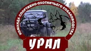 Зверовые лайки России №1 Скоро! НА ВСЕХ ЭКРАНАХ СТРАНЫ