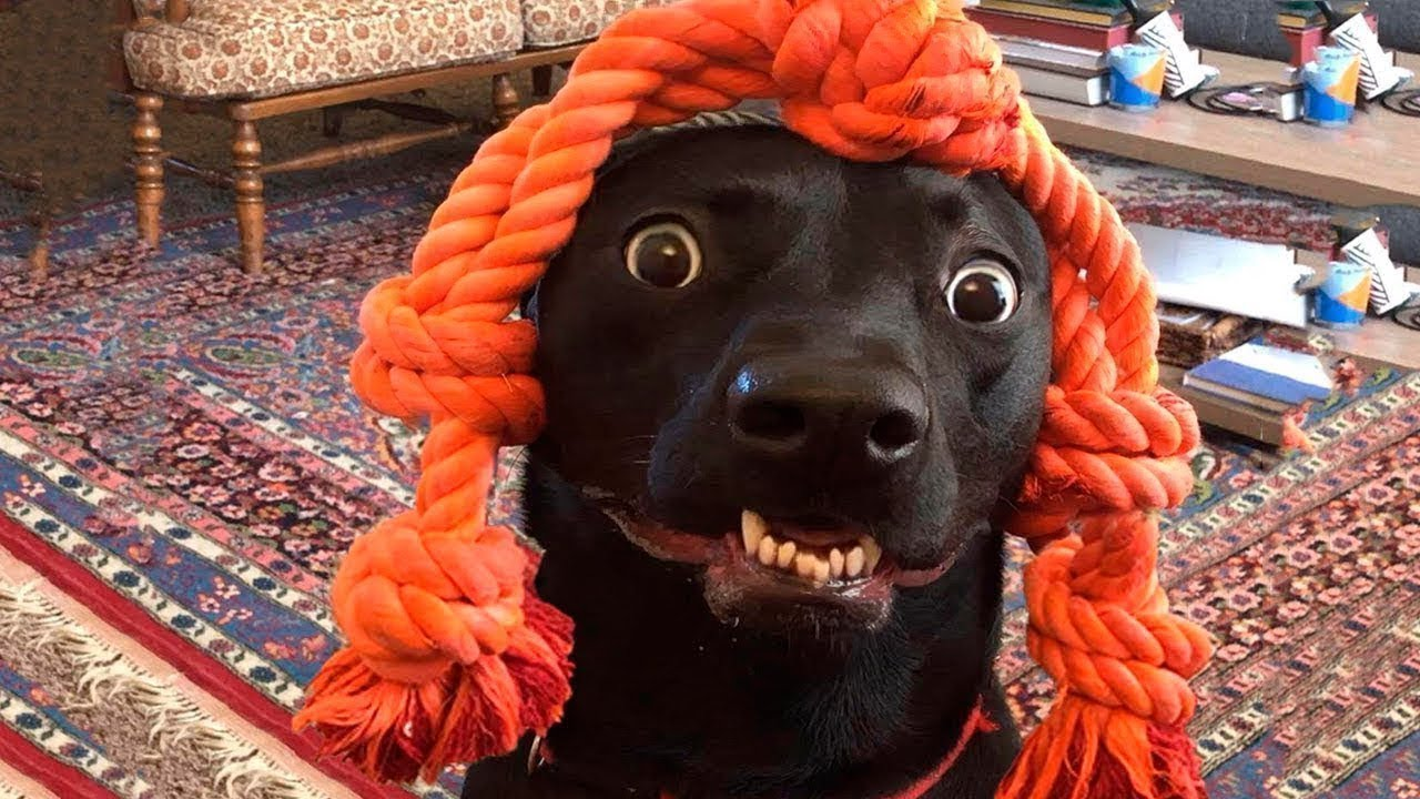 Днем, собака смешные видео