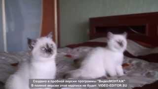 Самые очаровательные котята(, 2015-08-27T20:53:36.000Z)