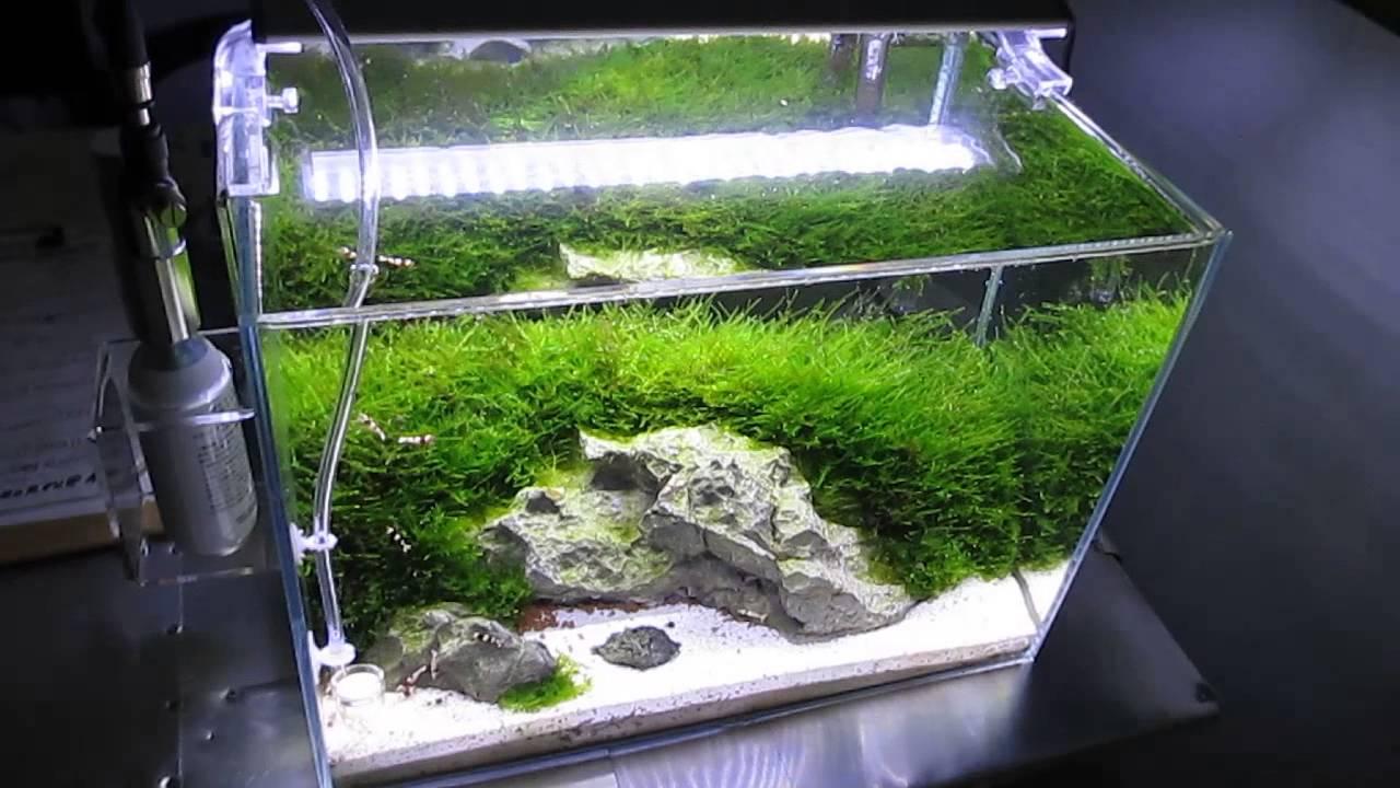 ada mini m crystal red shrimp planted aquarium with co2 and leds [ 1280 x 720 Pixel ]