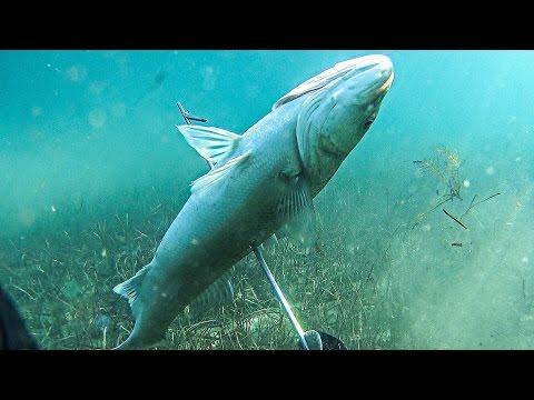 Αναζητώντας τα μεγάλα λαβράκια - Spearfishing In search of the great sea bass ✔