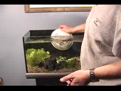 Aquarium Set Up - Chlorine And Chloramine Removal - Rinse Hands