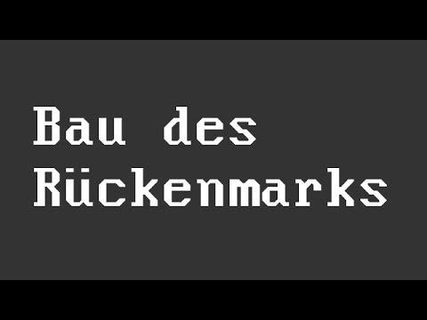 Das Rückenmark: Bau und Funktion | Biologie | Mensch - YouTube