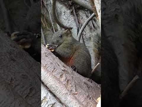 Baby squirrel eating walnut at Taipei 228 Park