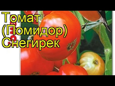 Томат Снегирек. Краткий обзор, описание характеристик solanum lycopersicum Snegirek