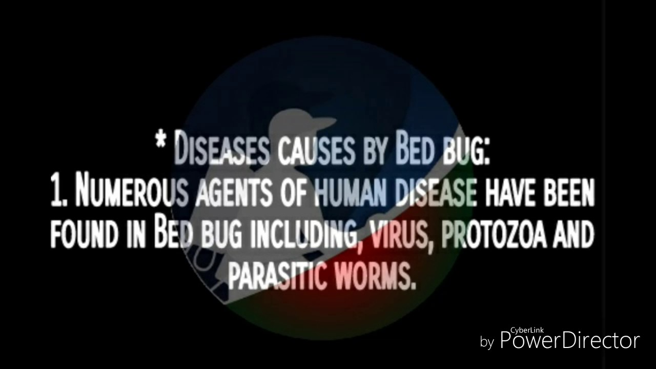 Bed Bug Control Service Dhaka Bangladesh Youtube