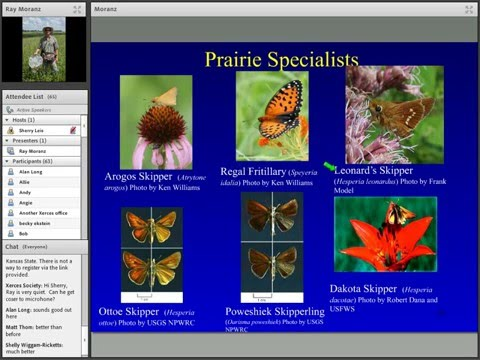 Webinar: The role of fire on the conservation of butterflies, pollinators