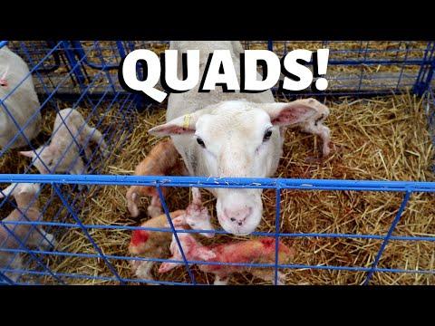 Seven sets of triplets, 2 sets of quads and ONE BIG SCREW UP: Vlog 196