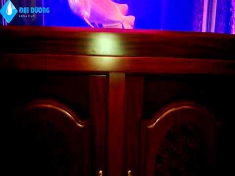 Hồ cá rồng tại nhà anh Kiên, Q.2 – Hồ cá cảnh Đại Dương