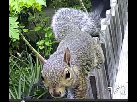 squirrel,wrong bait,charlotte county,florida