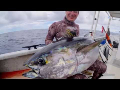 Spearfishing Yellow Fin Tuna In Panama
