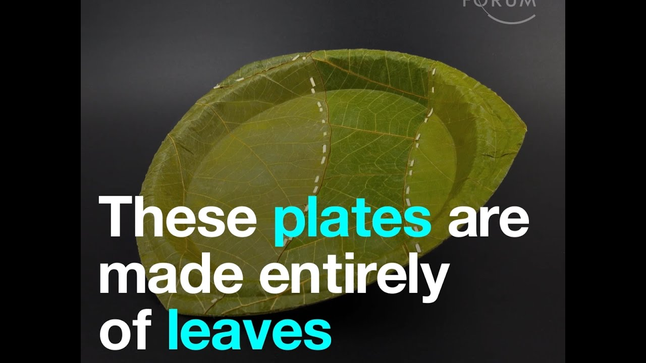 These plates are made entirely of leaves