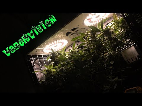 Cannabis PC Micro Grow Flower Cycle and Harvest! ⋆ Passion