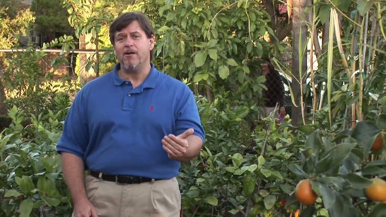 Fruit Tree Maintenance : Get Rid of Fruit Flies Permanently