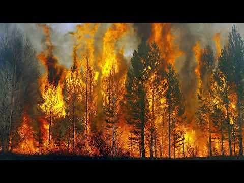 В России тотальные пожары в Сибири