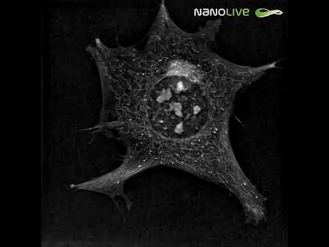 Label-free live cell imaging of a Preadipocyte cell with Nanolive imaging