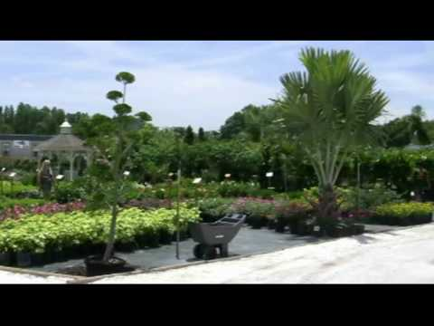 The Plant Stop Garden Center Grand Opening Coastal Rental Center Tampa