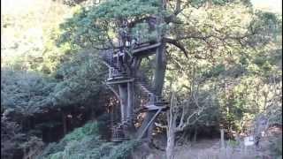 京丹後市久美浜町蒲井・旭地域にあるツリーハウスを見てきました。 すご...