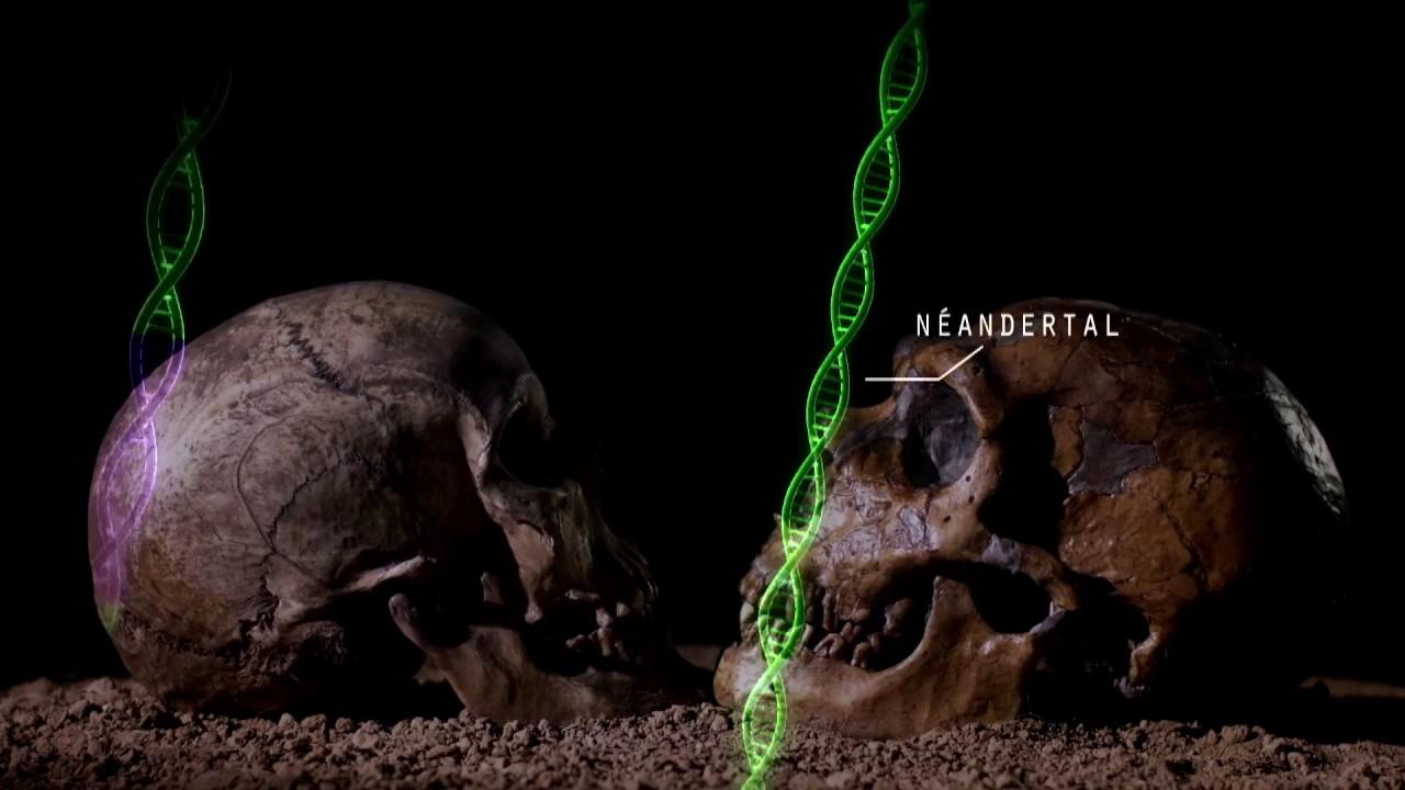 """Résultat de recherche d'images pour """"le fils de néandertal ou le secret de nos origines"""""""