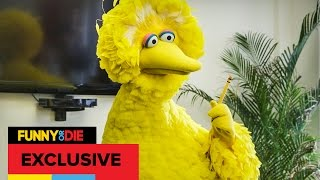 Big Bird Interns At Funny Or Die