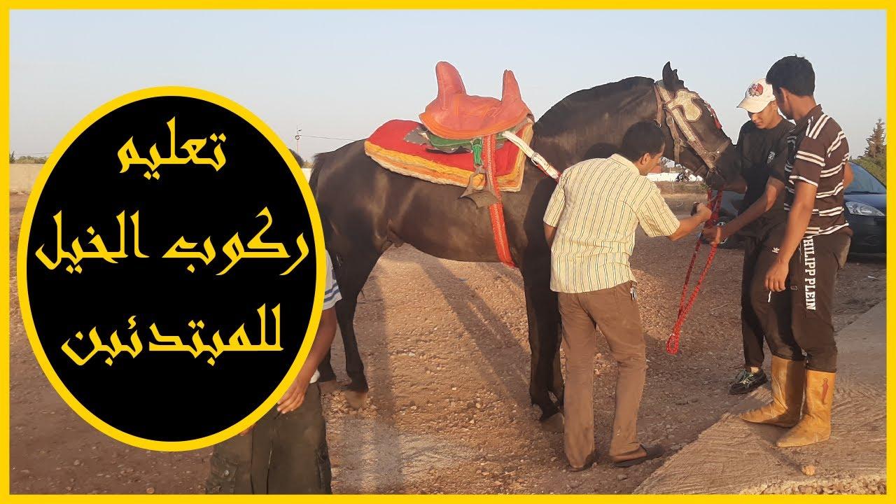 تعليم ركوب الخيل 2020 خيول التبوريدة المغرب Fantasia Maroc حسان الجهني Horse Lover Youtube