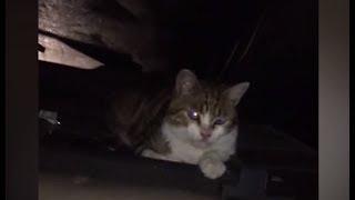 Сюжет ТСН24: Подробности задержания наркокурьеров и кота в Новомосковске