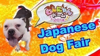 Japanese Dog Fair - Pitbull/french Bulldog Mix! (gopro Hero4 Video, Nagoya Dome Dog Fair 2015)