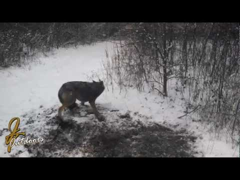 Trapper Paul Video 1 of the 2012 Series