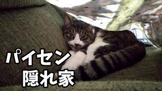 家の先輩猫は色々と自由です
