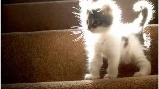 Самые милые котята)*