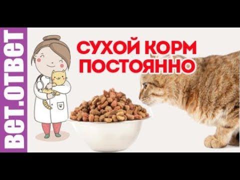 Как кормить котенка кормами