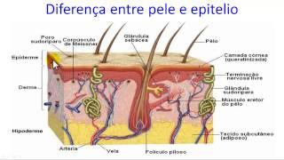 Diferença entre pele e epitélio