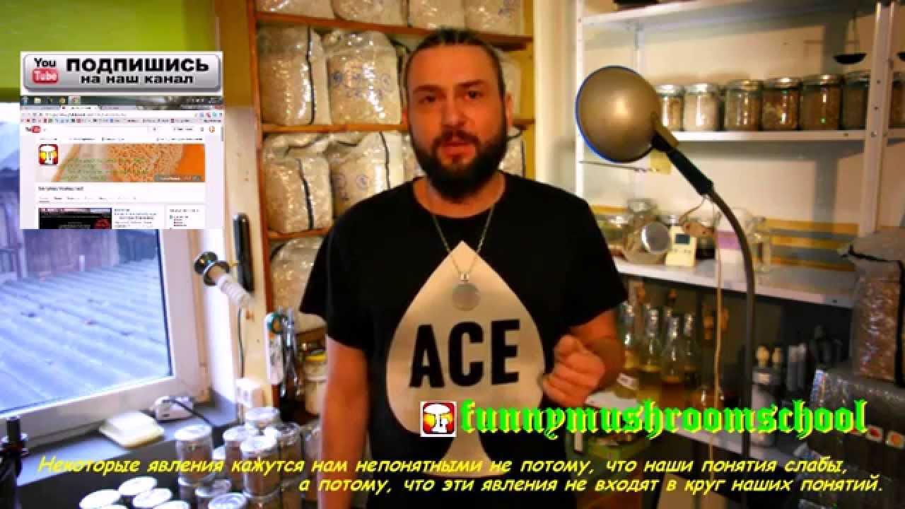 Вешенка Как готовить агар агар, мицелий ОШИБКИ !!! - YouTube
