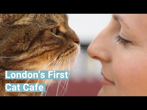 Lady Dinah's Emporium - London's First Cat Cafe