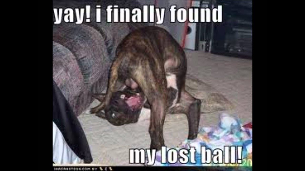 who let the dogs out - funny dog pics - YouTube