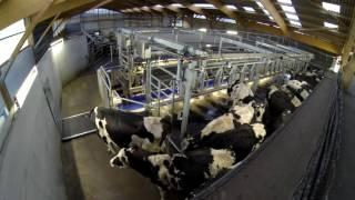 Entrée,sortie des vaches