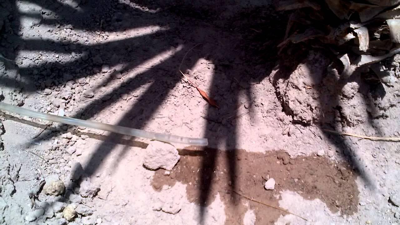Tipos de riego por goteo con pet en palma yuca cuauhtemoc - Tipos de riego por goteo ...